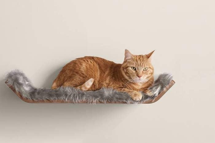 Cat sitting on Vista perch shelf
