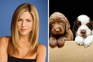Rachel is crossing her arms on the left with two puppies on the right