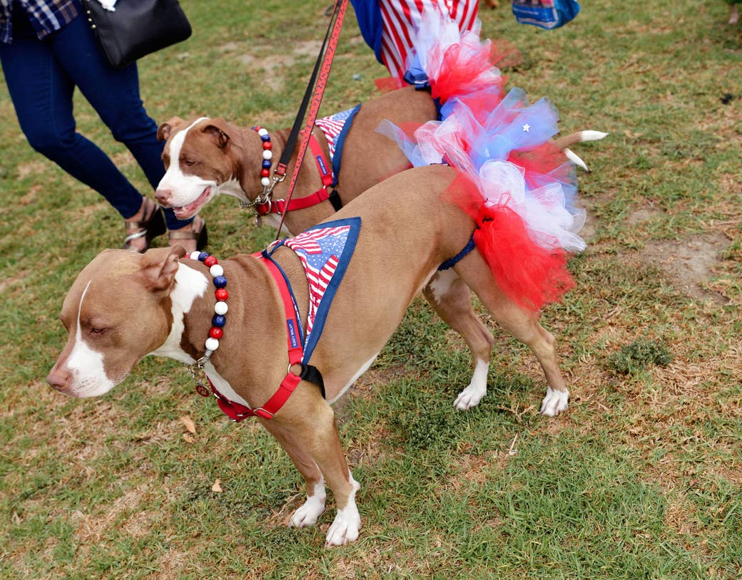 Two dogs with flag kerchiefs as harnesses and other red, white, and blue accessories