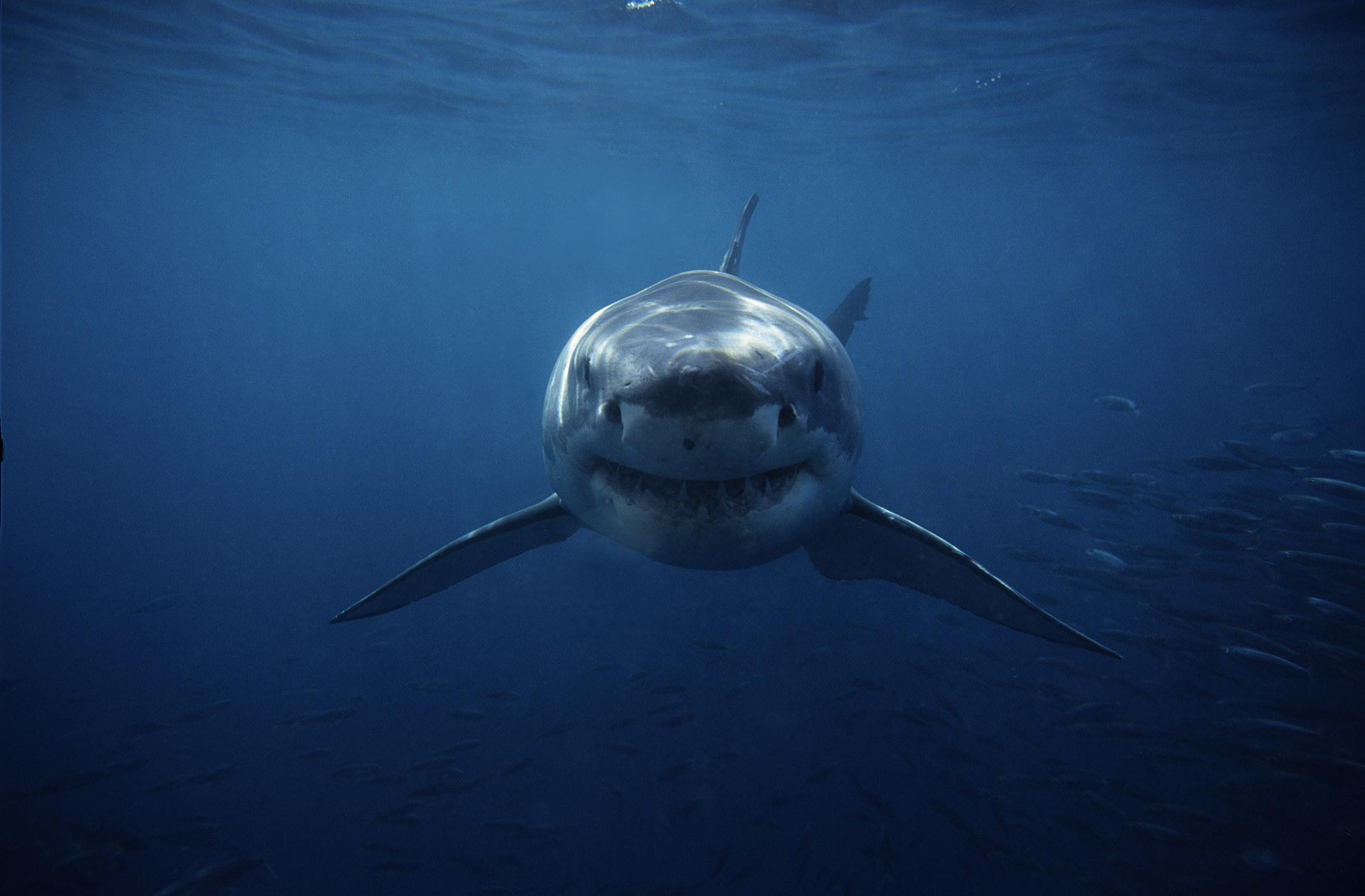 A shark swimming toward the camera