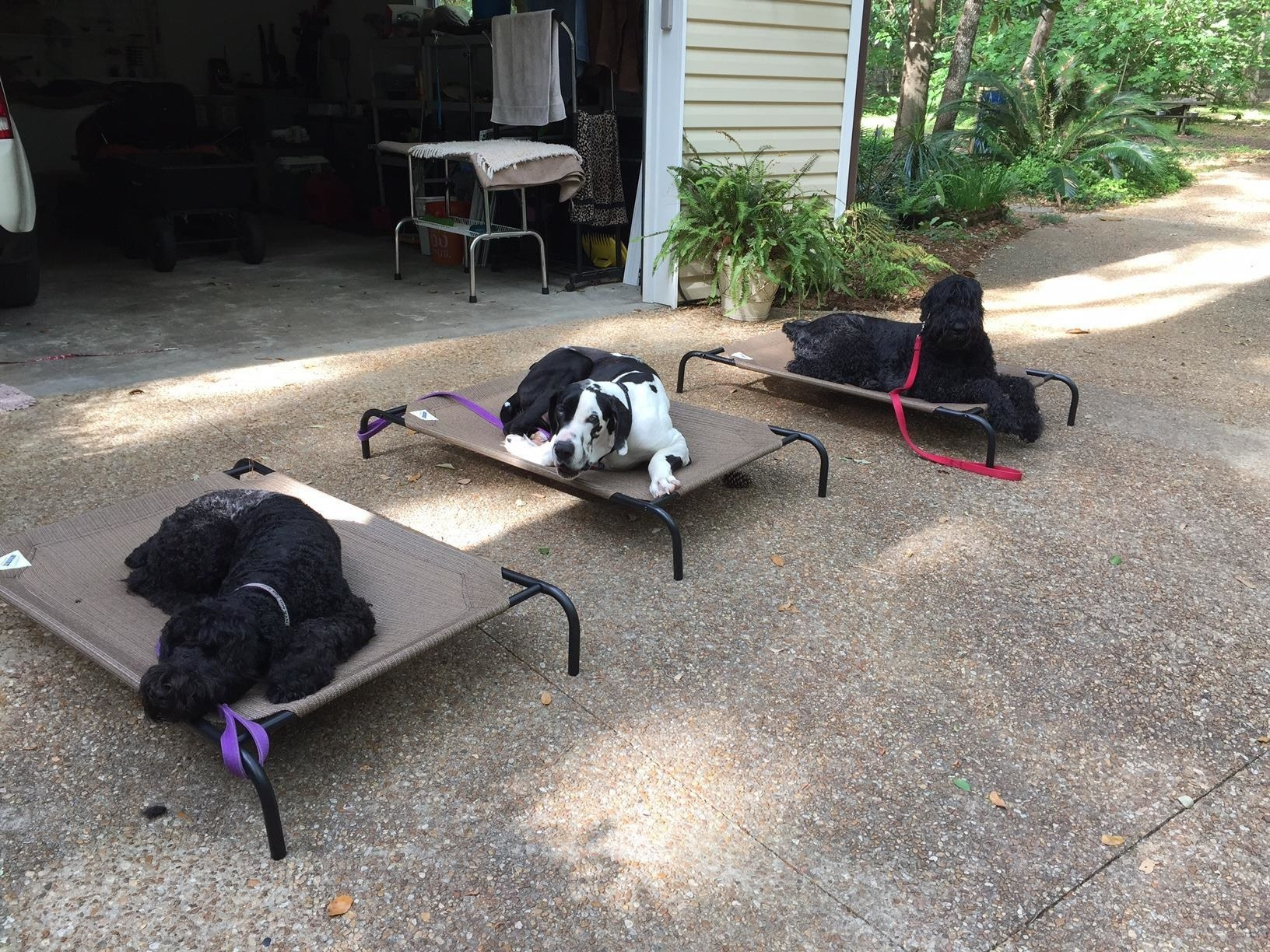reviewer photo of three dogs relaxing on three beige elevated dog beds