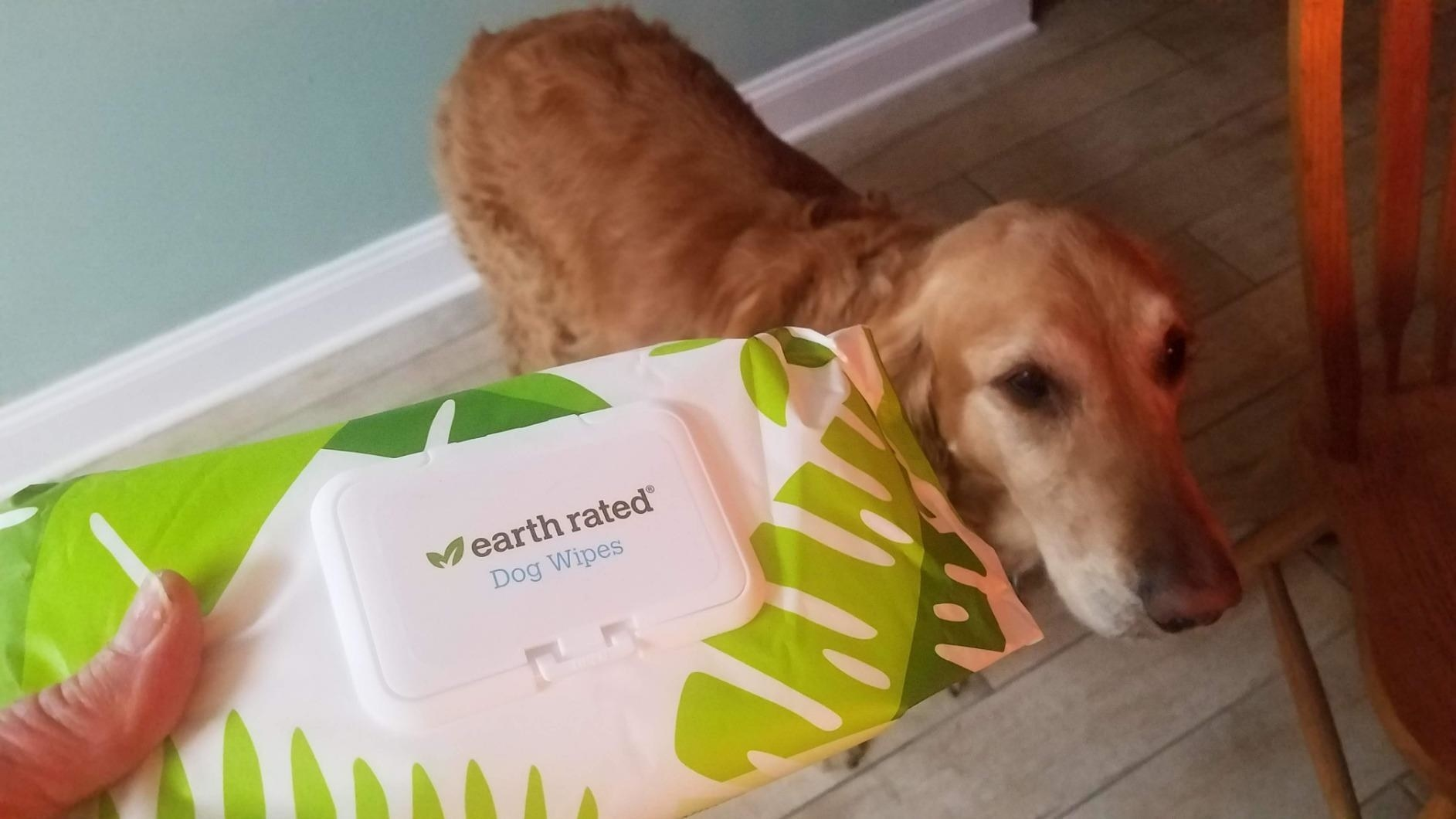 reviewer holding up a packet of earth rated dog wipes