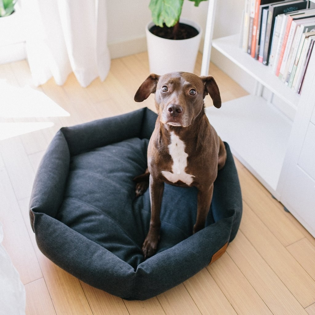 dog sitting in a blue hexagon shaped pet bed with cushy sides