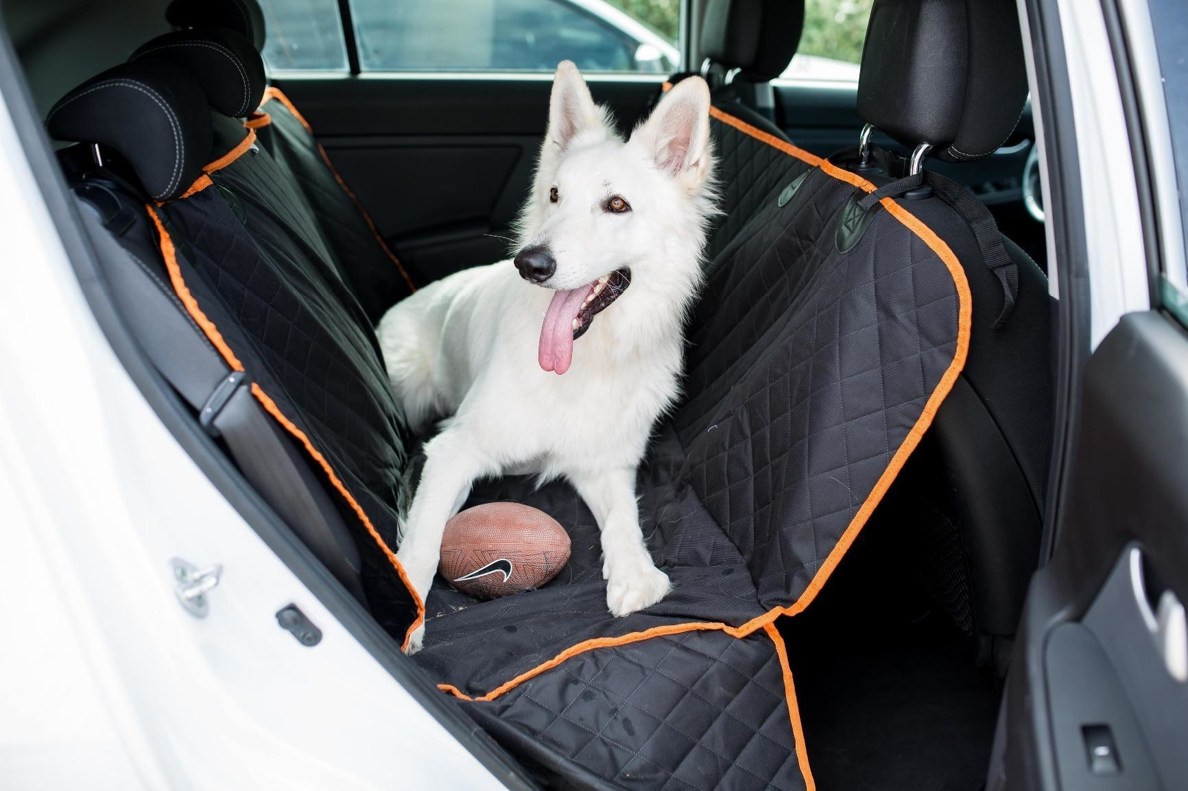 reviewer photo of a swiss shepherd sitting on a car cover