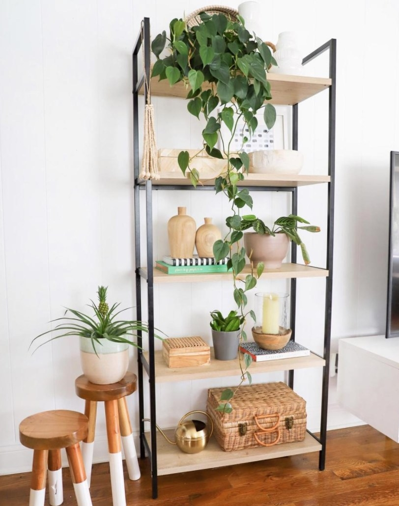 The bookshelf with plants and decor on it