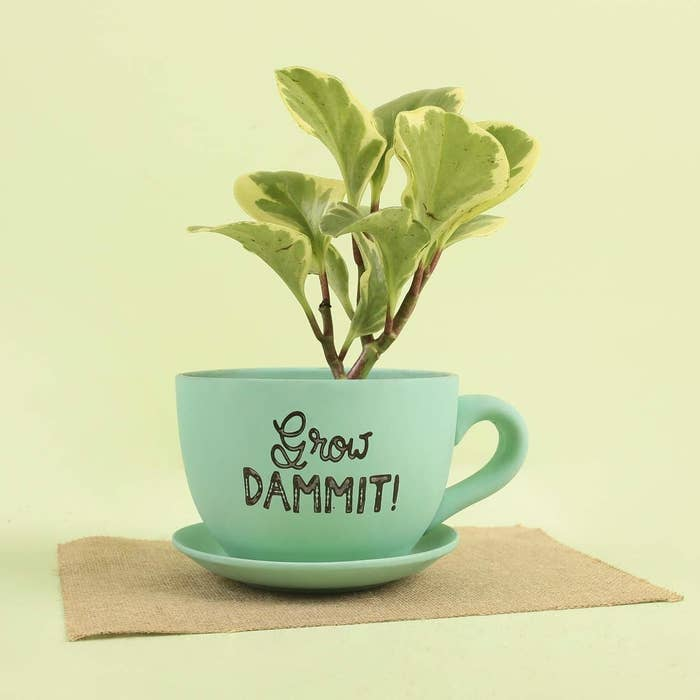 """A teal coloured planter in the shape of a teacup and saucer with the words """"Grow Dammit!"""" on it."""