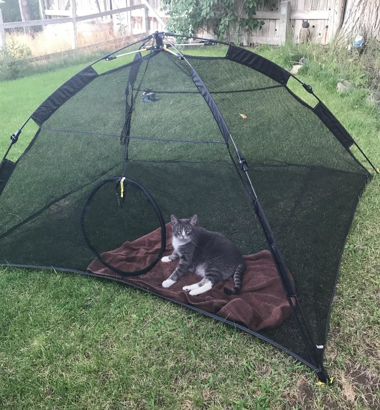 A cat sits on a blanket in the cat tent