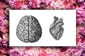 anatomical sketches of both the heart and brain