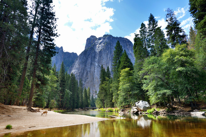 Yosemite Park with mountains, trees, and a deer by the water