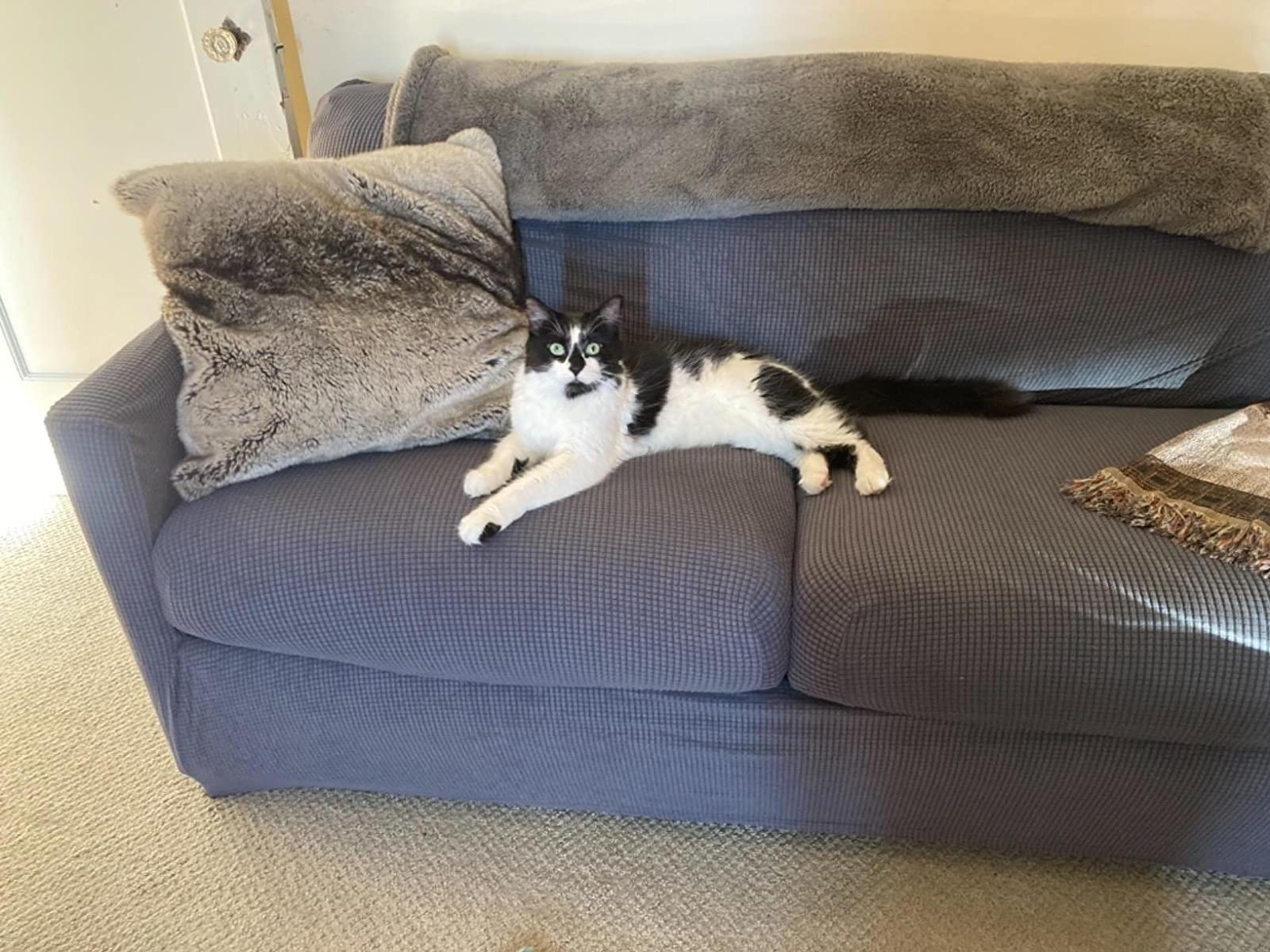 reviewer photo of gray loveseat cover on a couch with a black and white cat sitting on it