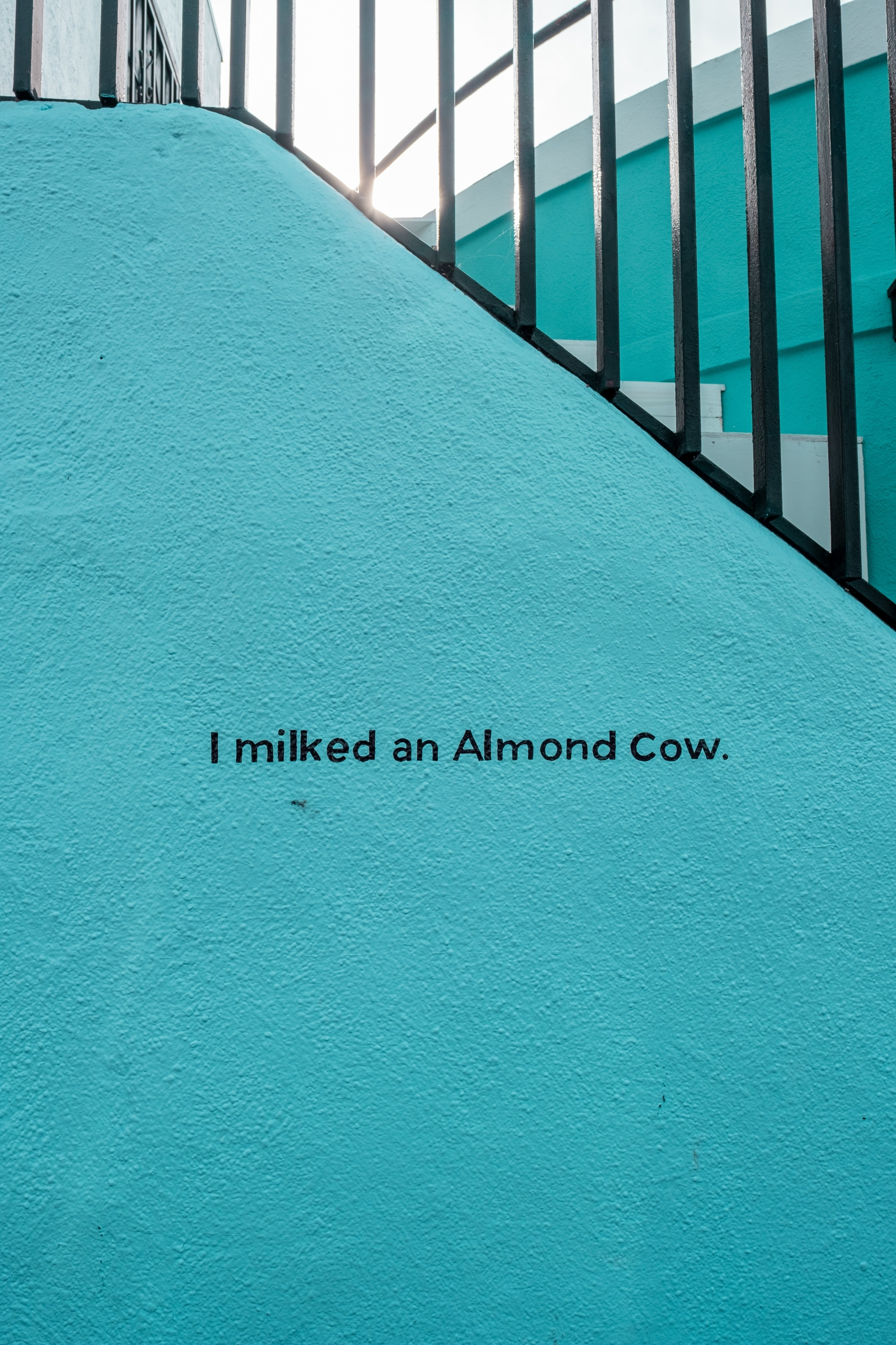 """A blue wall says """"I milked an Almond Cow"""" in black"""