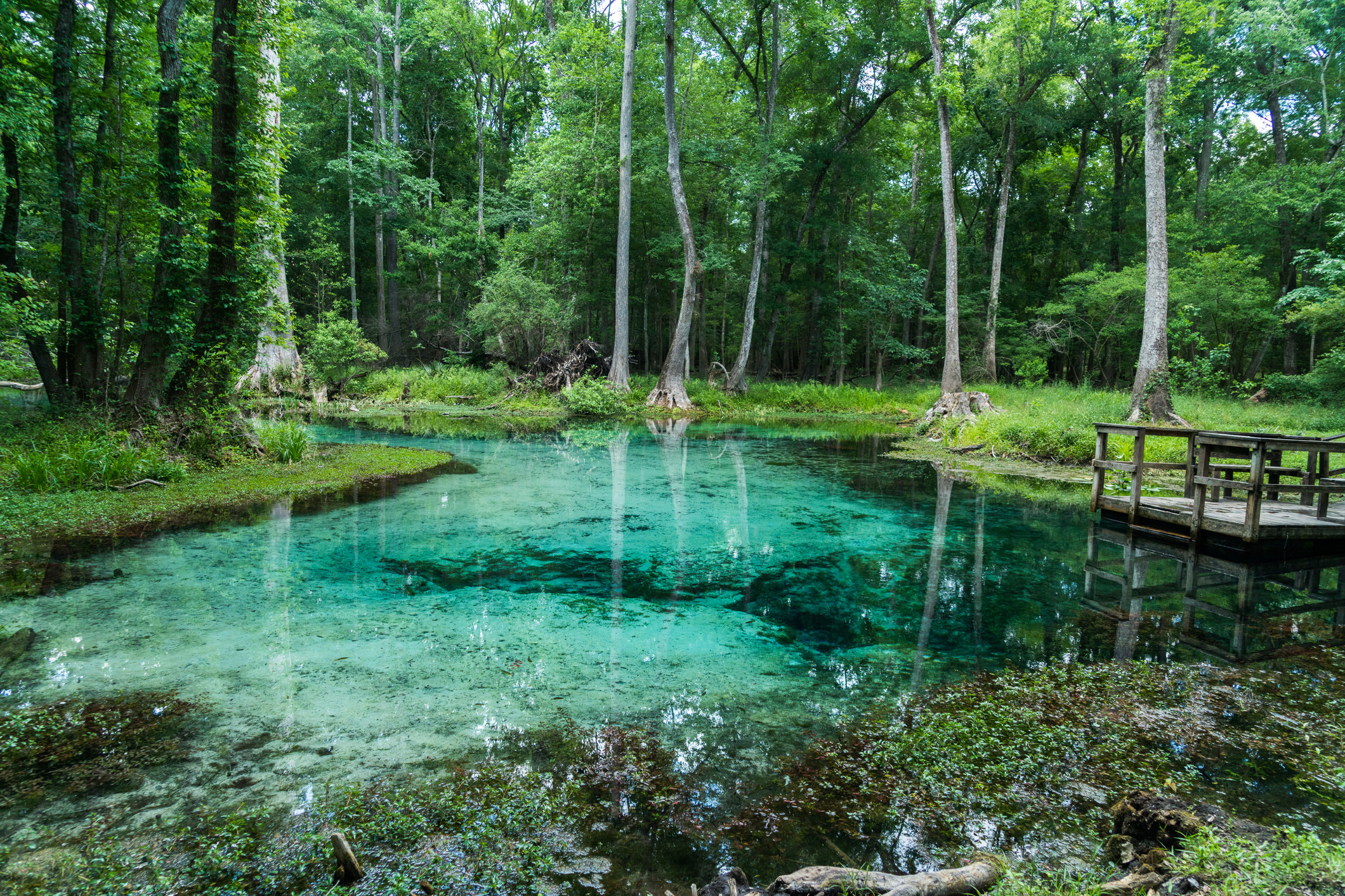Photo of natural springs in High Springs, Florida
