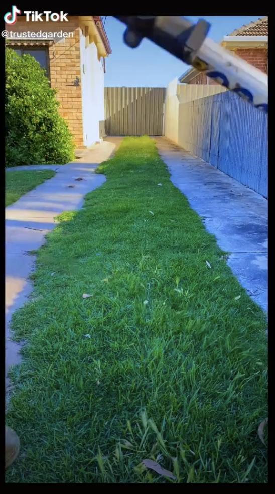 A driveway with grass in the middle that's overgrown