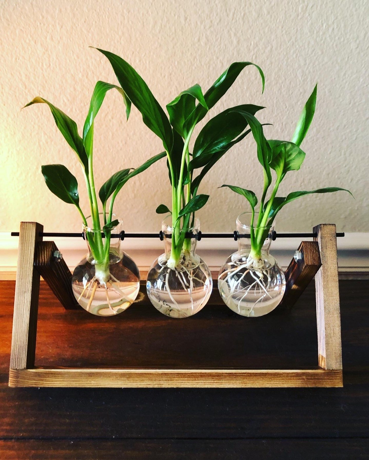 Reviewer's trio of glass bulbs have plant stems propagating in them