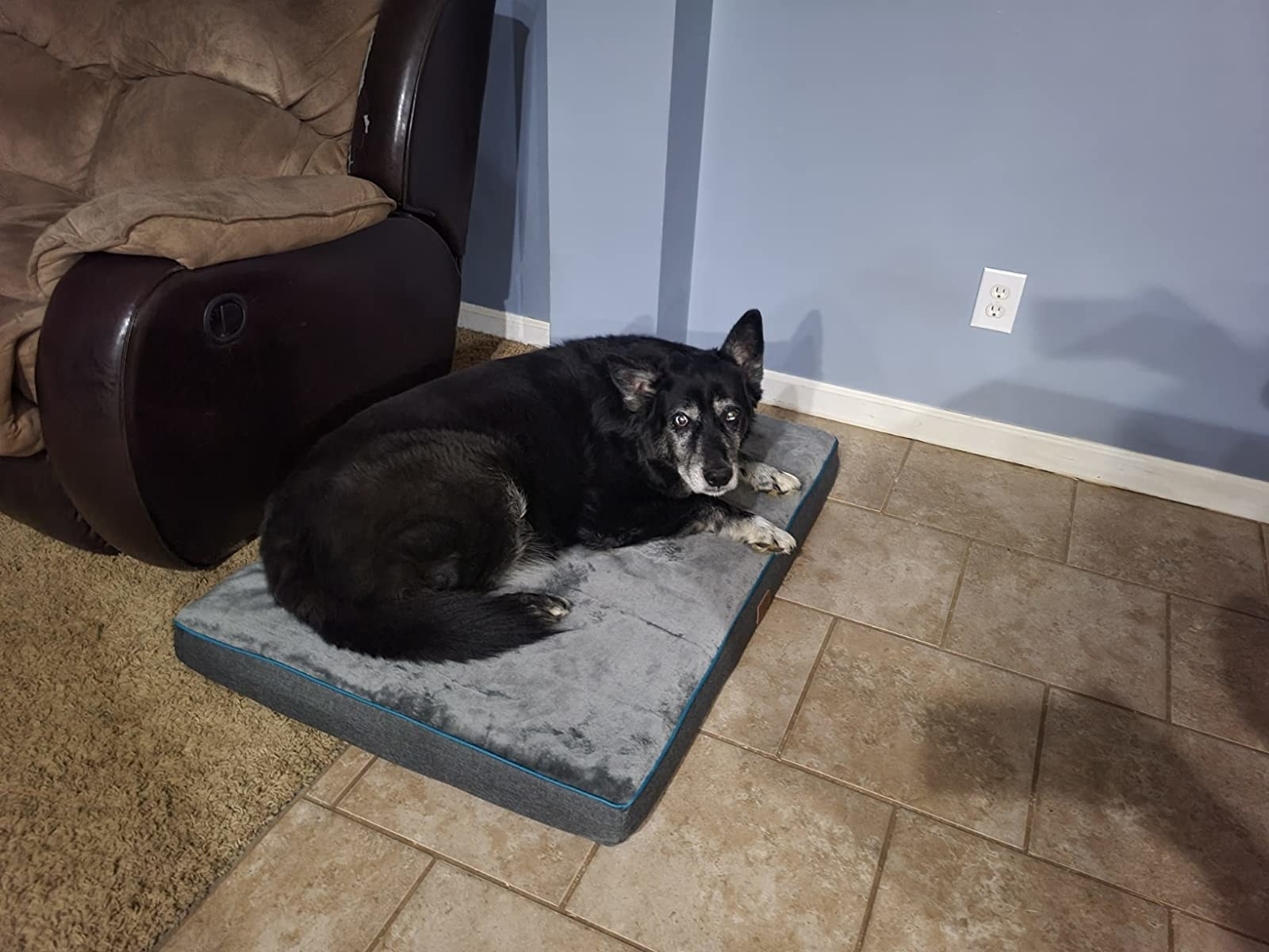 reviewer image of a large black down laying down on the grey XL Bedsure dog pet