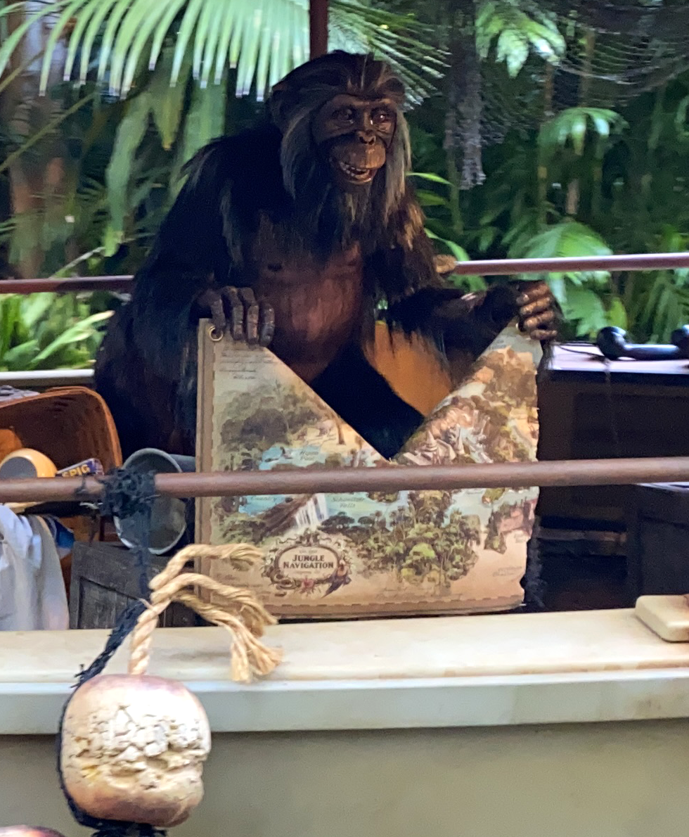 Older chimpanzee holding a map that's partially torn up