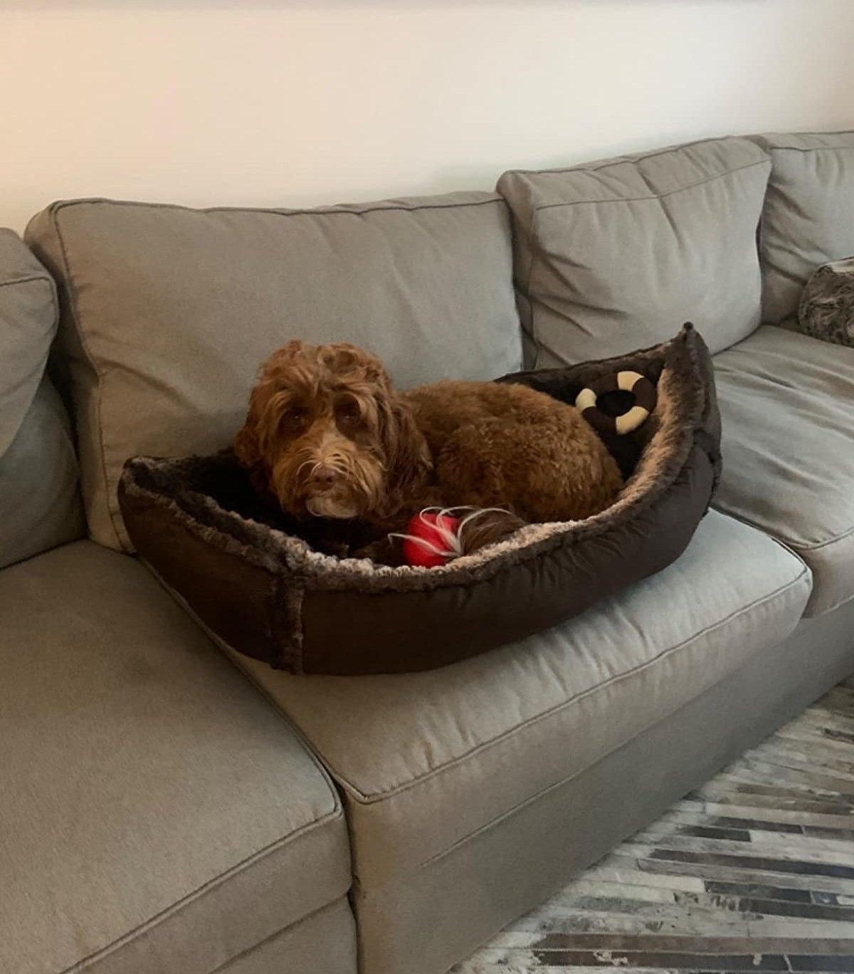 reviewer image of a brown dog lounging in the medium pirate boat bed