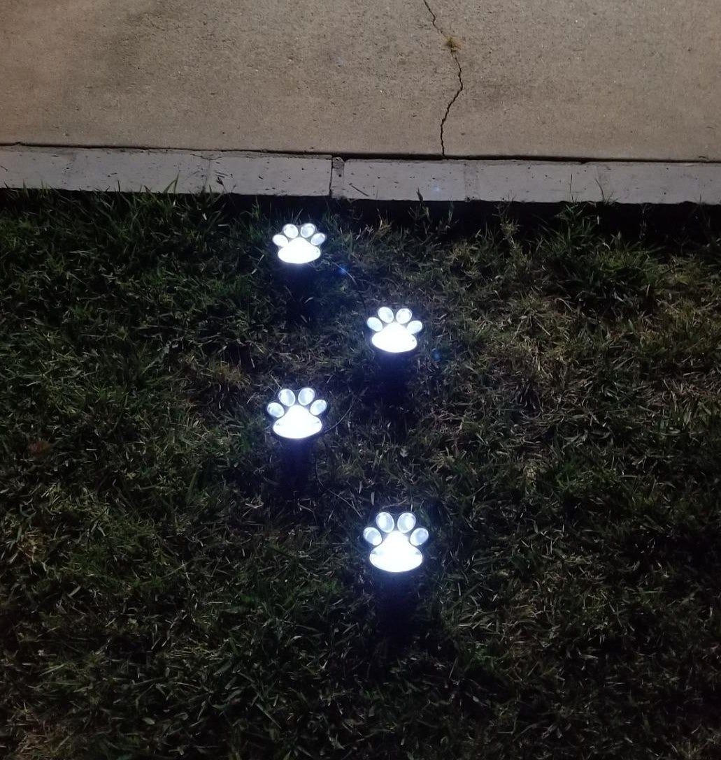 Four small lit-up paw lights on grass