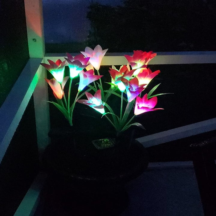 The same flowers lit up at night