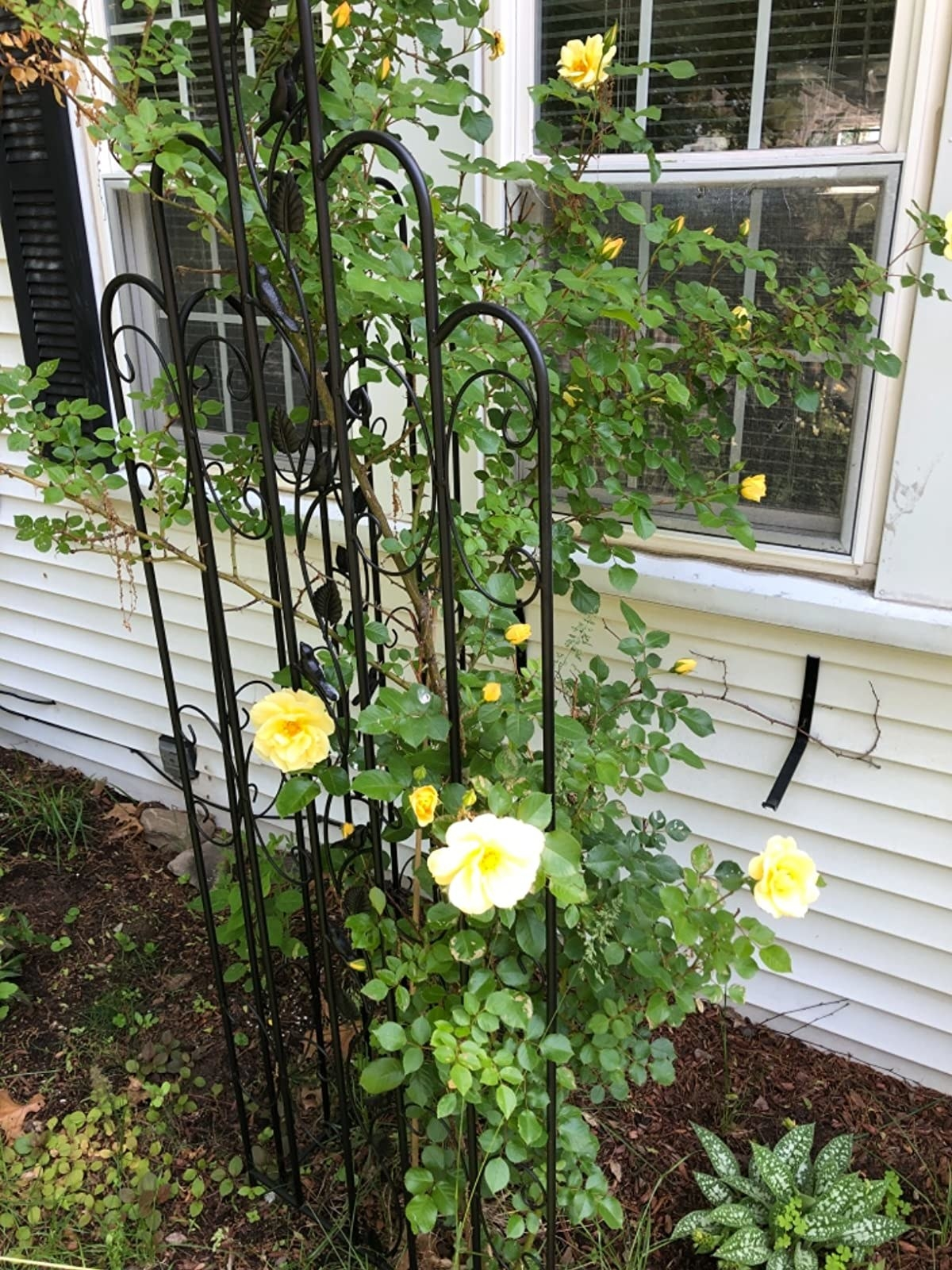 A reviewer photo of a garden trellis with flowers growing on it
