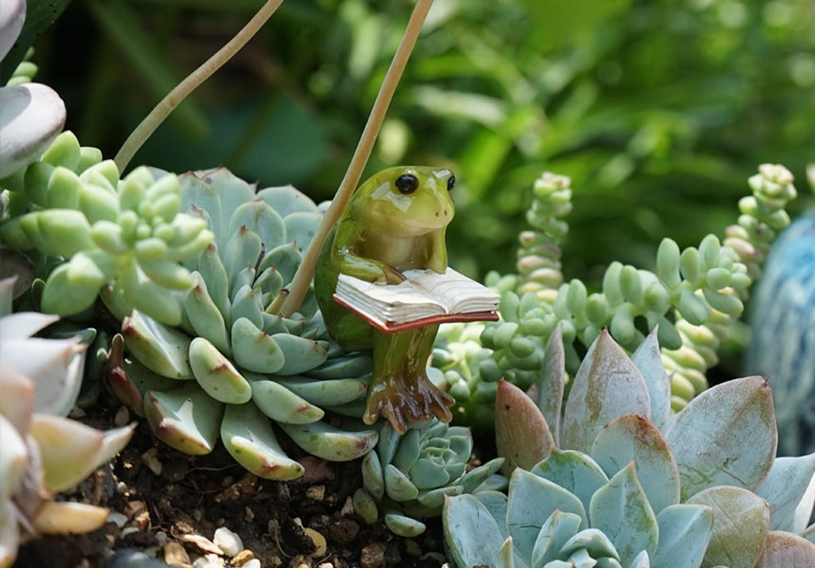 A tiny frog sitting on a succulent reading a book
