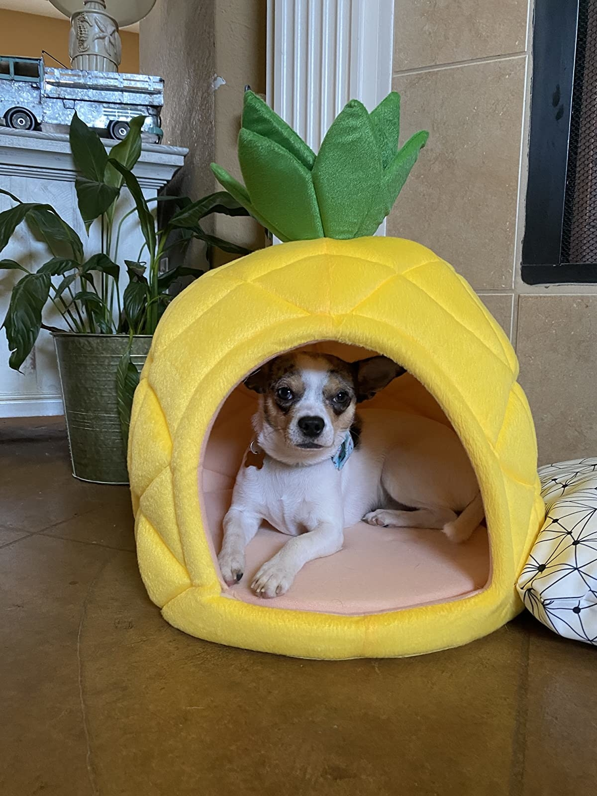 reviewer image of a small dog inside the YML pineapple house