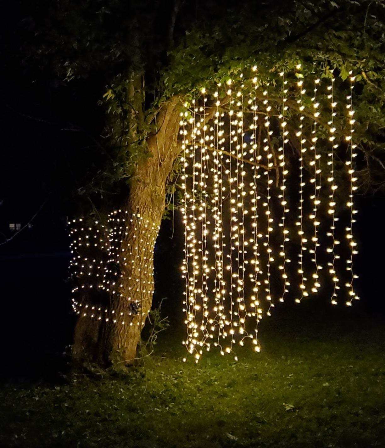 Curtain string lights hanging from a tree