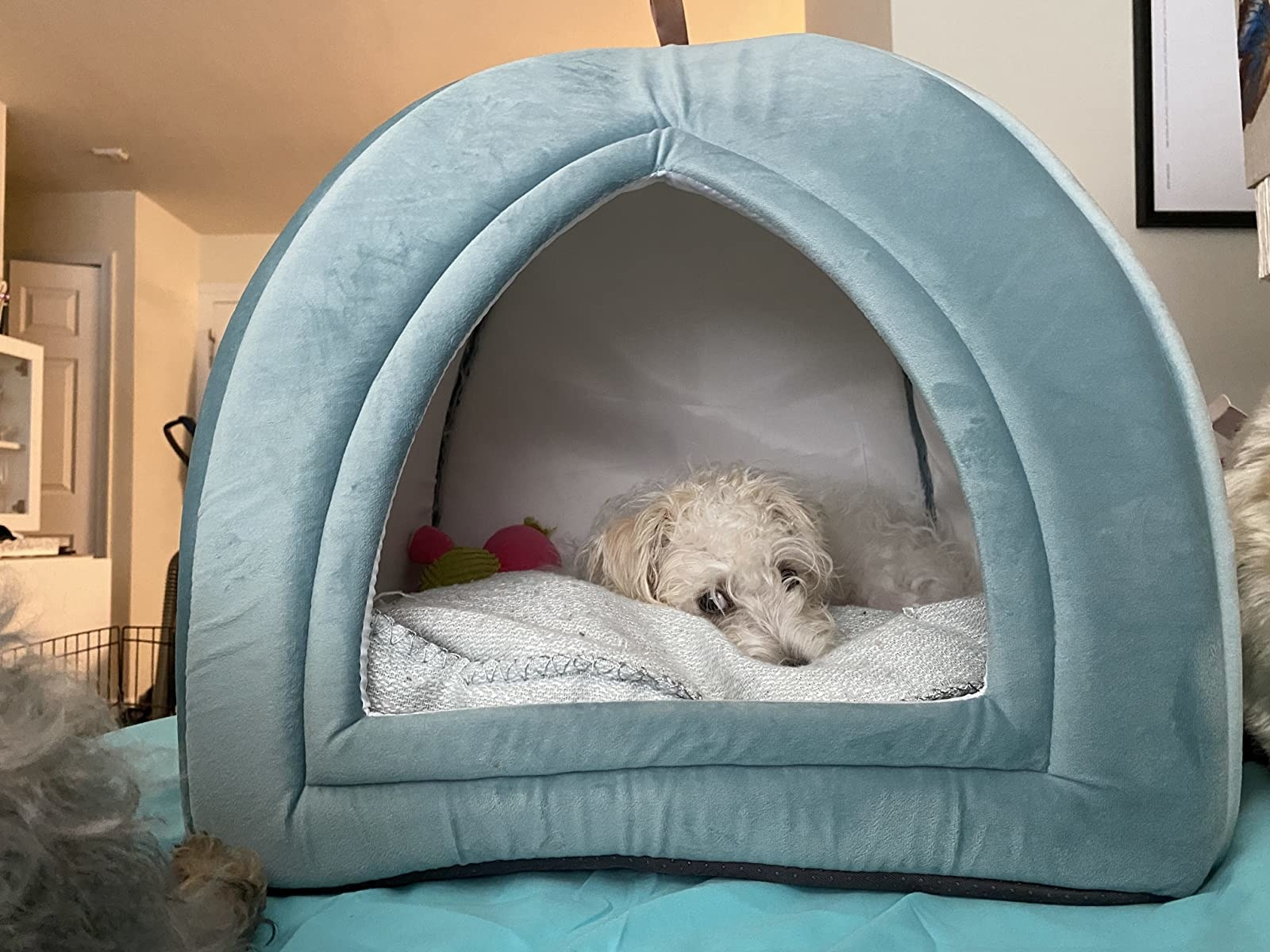 a small white dog lounging inside the washed blue cave bed