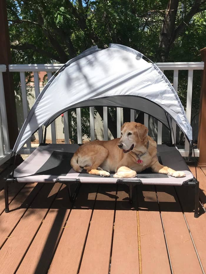 reviewer image of labrador lounging on a deck inside the outdoor canopy bed