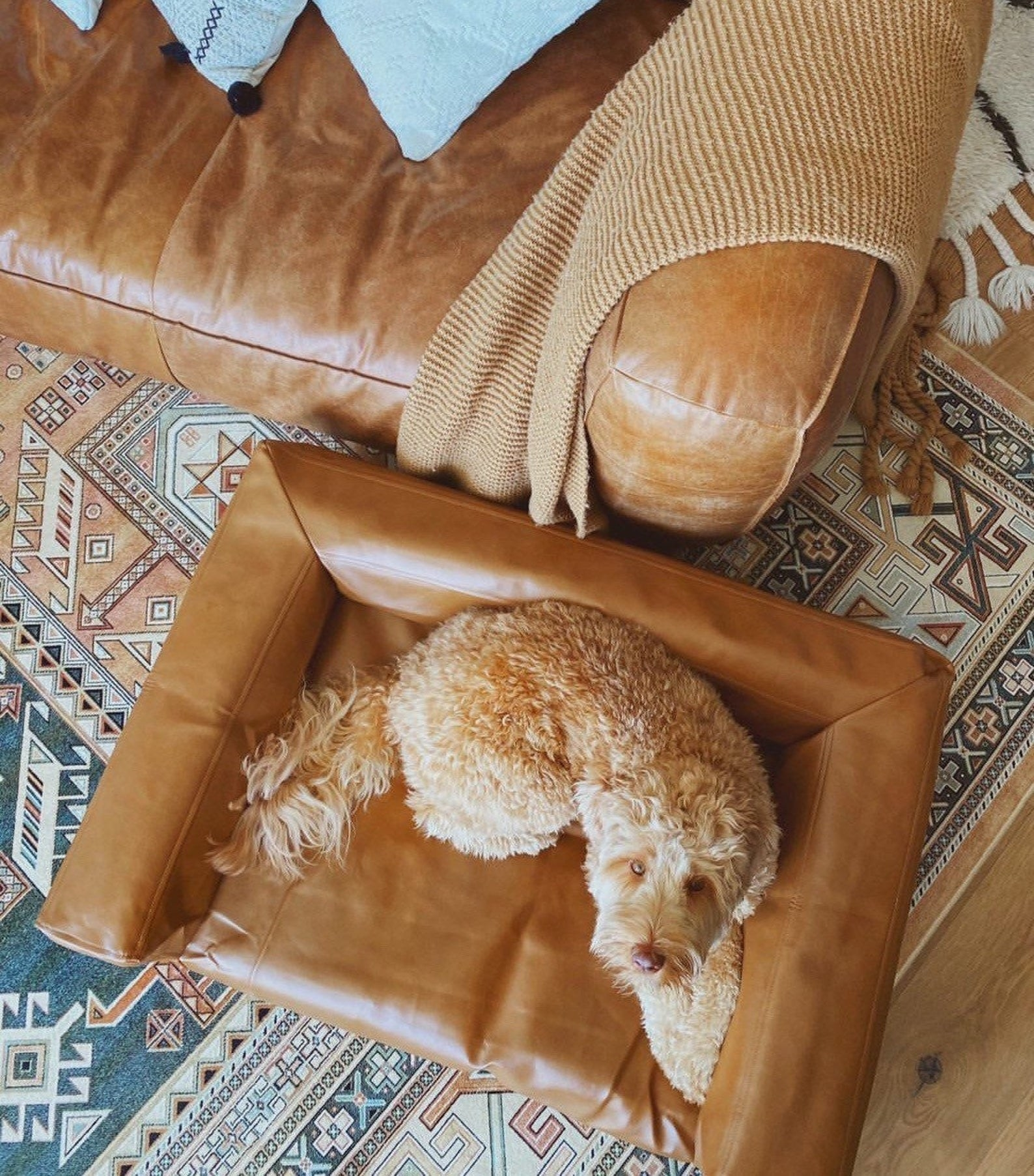 a medium sized dog lounges on a brown leather dog couch