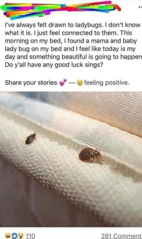 person who posted a picture of bed bugs thiinking they were lady bugs