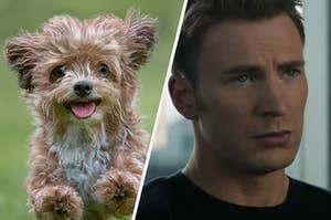 A fluffy puppy is mid leap in the air and a close up of Steve Rogers looking stoic