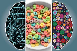 a left brain on the left, fruit loops in the middle, and a right brain on the right