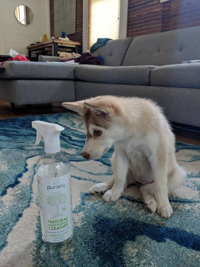 reviewer image of a puppy sitting next to a bottle of puracy spray