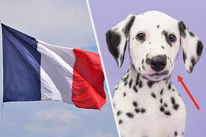 A French flag, a dalmatian