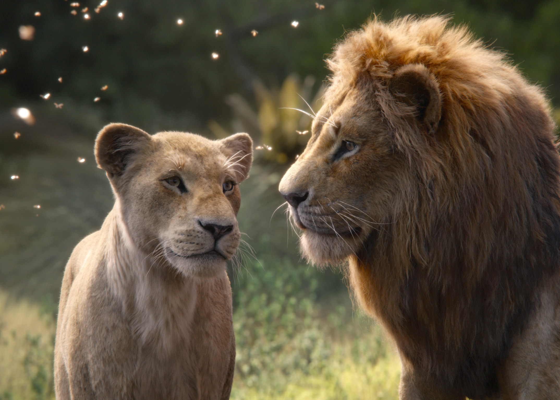 Simba and Mufasa from the film