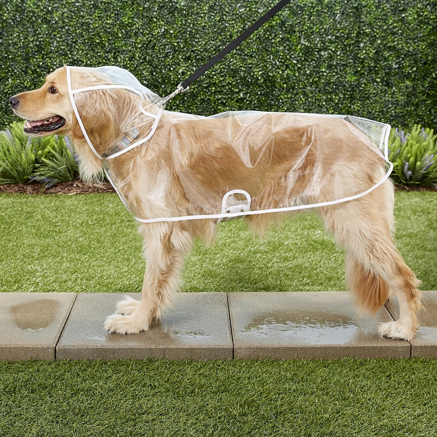 the dog wearing the see-through raincoat