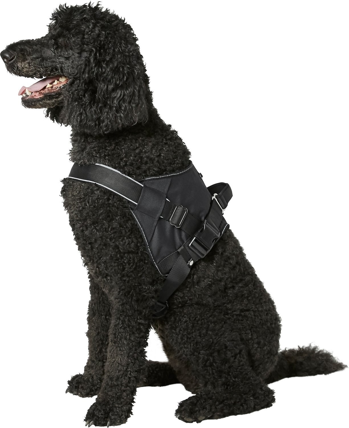 a large dog wearing the harness