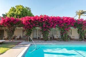 Swimming pool with bouganvilla