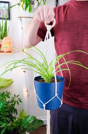 hand holds blue planter nestled in white macrame plant hanger