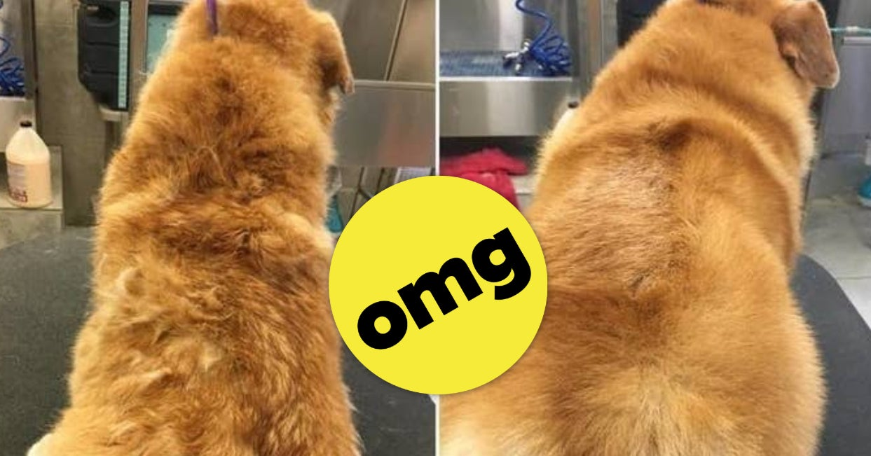 18 Products With Before-And-After Photos That Anyone With A Dog Should Probably See