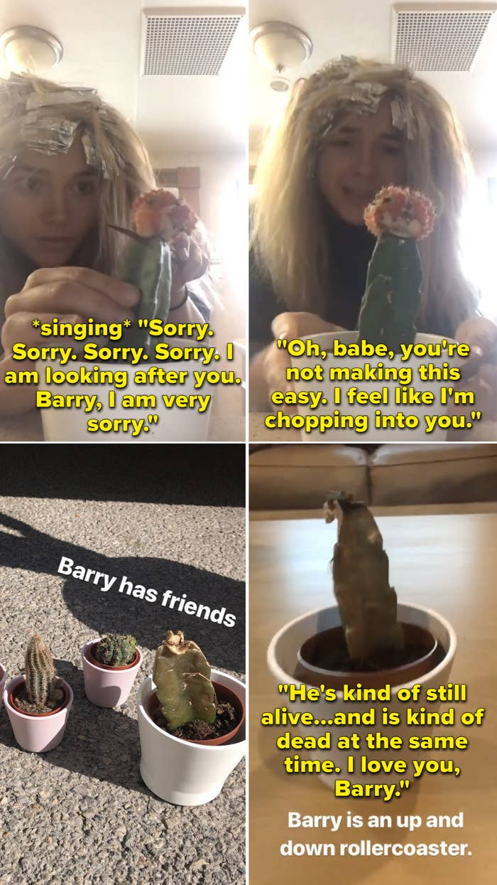 """Florence cutting into her cactus and singing, """"Sorry. Sorry. Sorry. Sorry. I am looking after you. Barry, I am very sorry"""""""