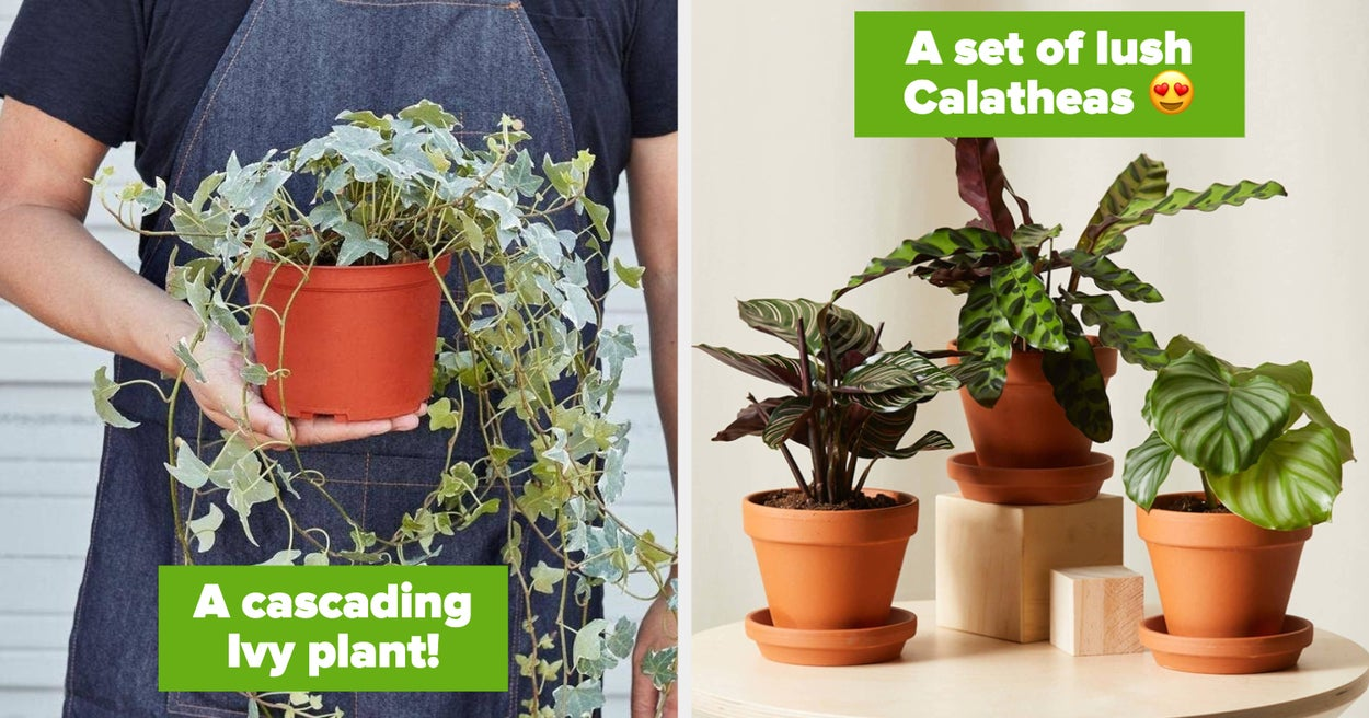 18 Plants To Make Your Space Bloom
