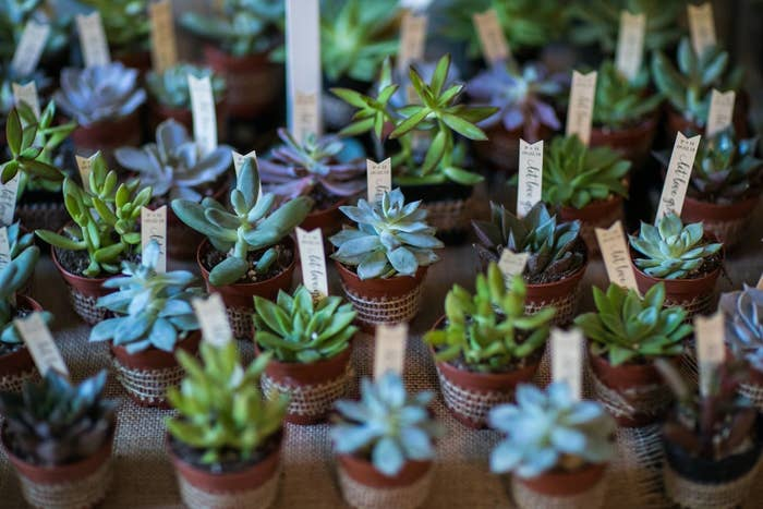 """A bunch of succulents on a table with tags in them that say """"let love grow"""""""