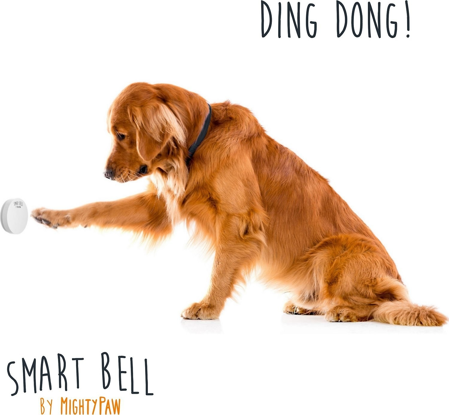 A dog pressing the doorbell with their paw