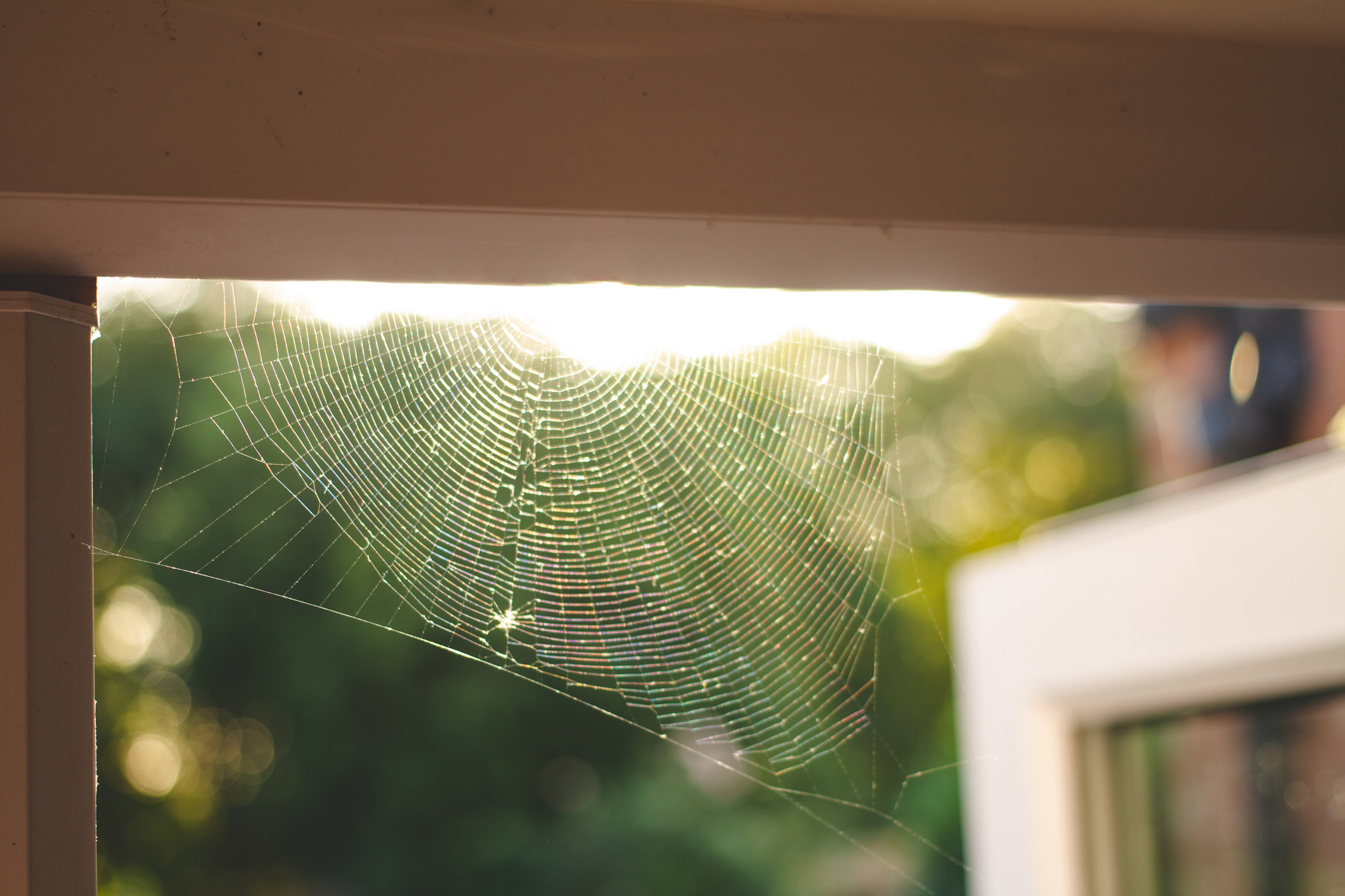 A cobweb in the door frame of a home in the UK during summer