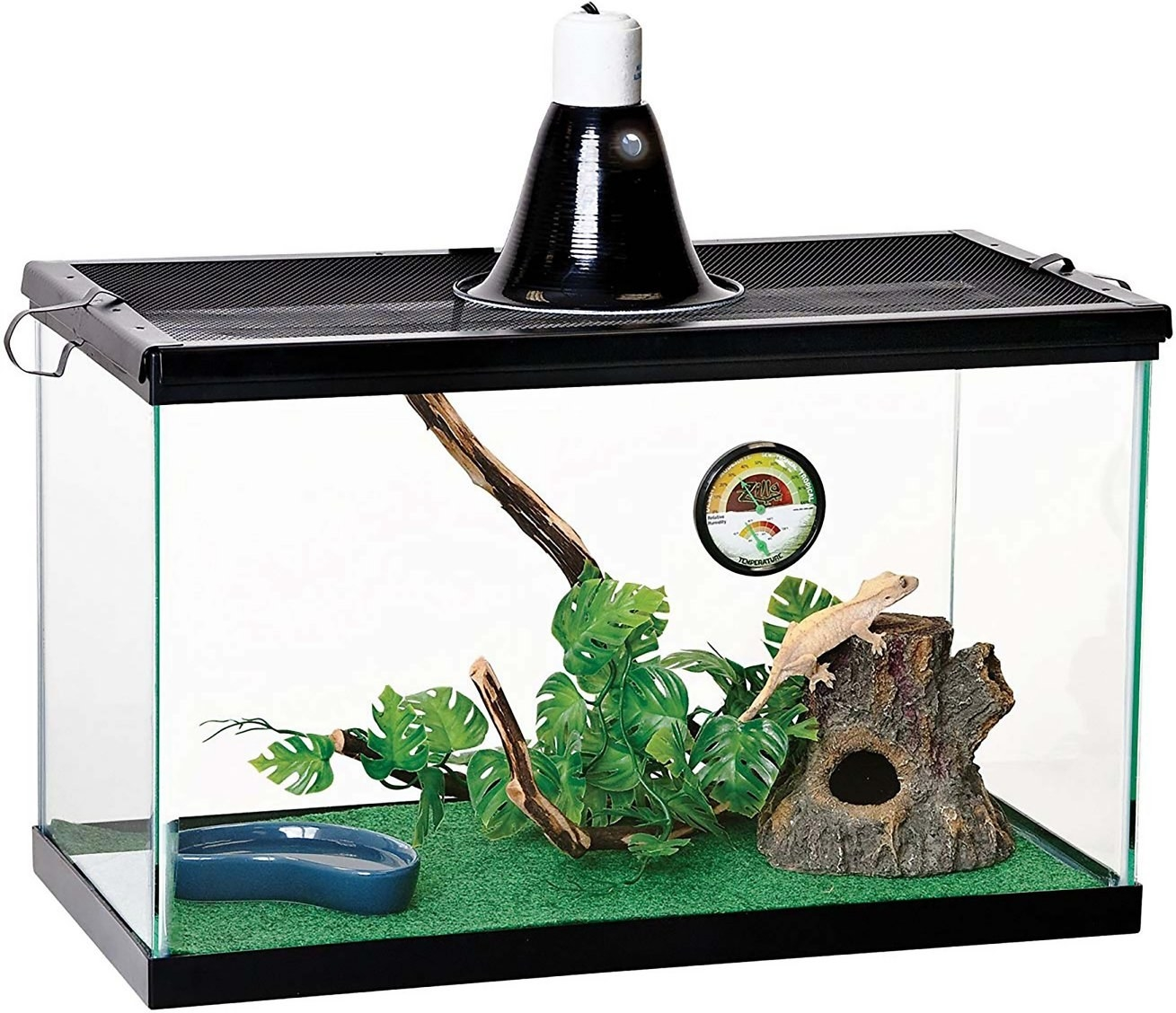 A iguana living inside the terrarium with a reflective dome, temperature gauge, and a liner