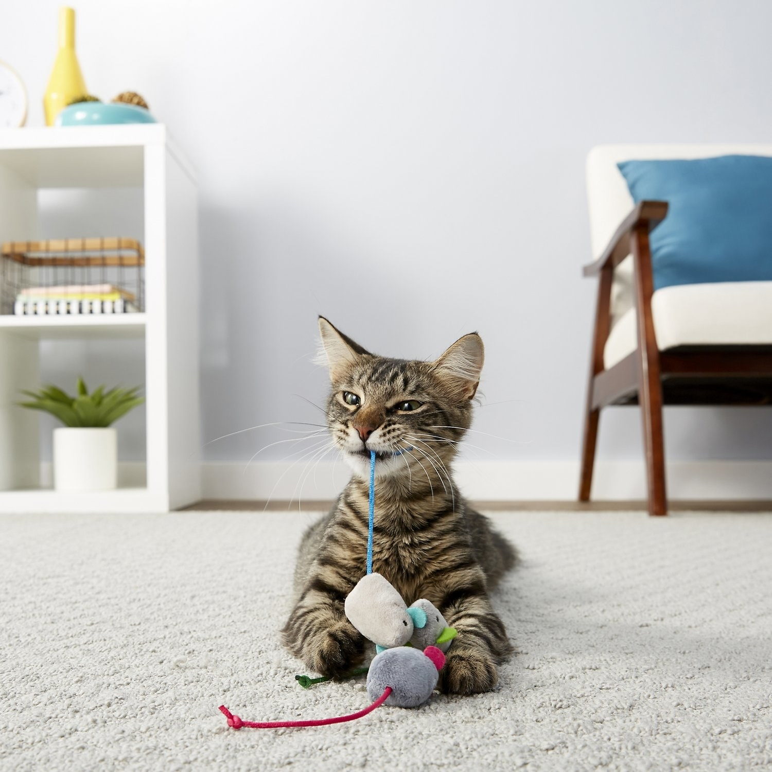A cat playing with the mice toys