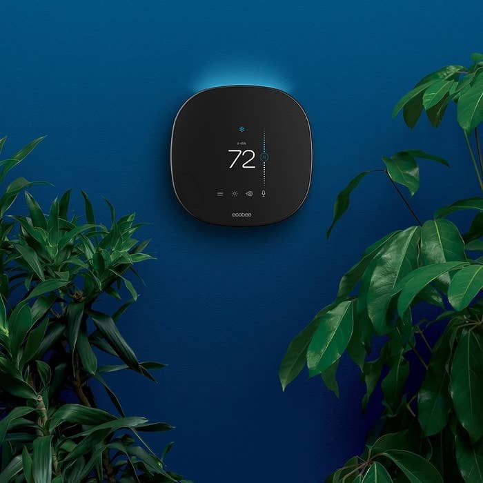 The thermostat on a wall surrounded by plants