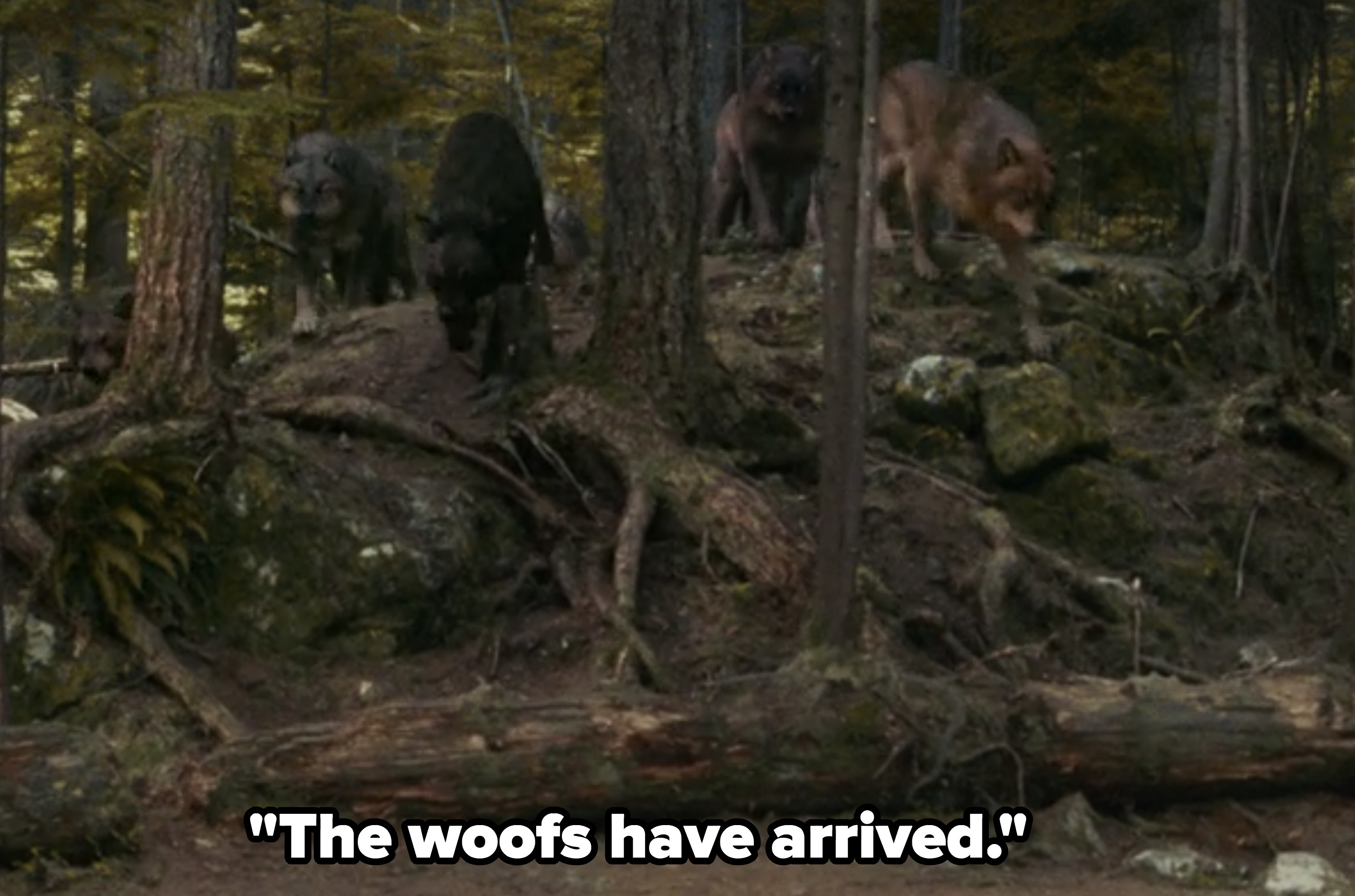 Rob: The woofs have arrived